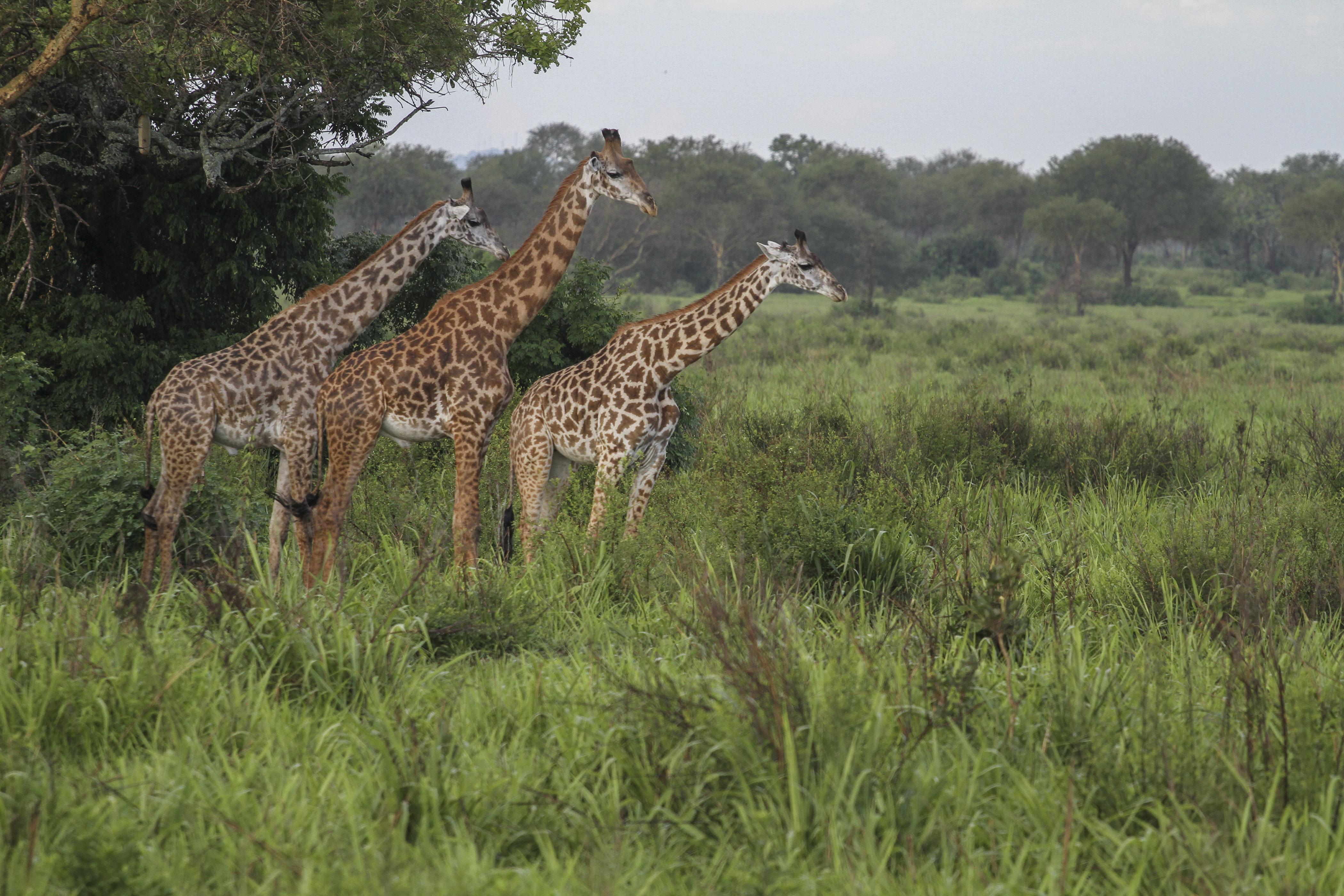 自駕遊非洲06