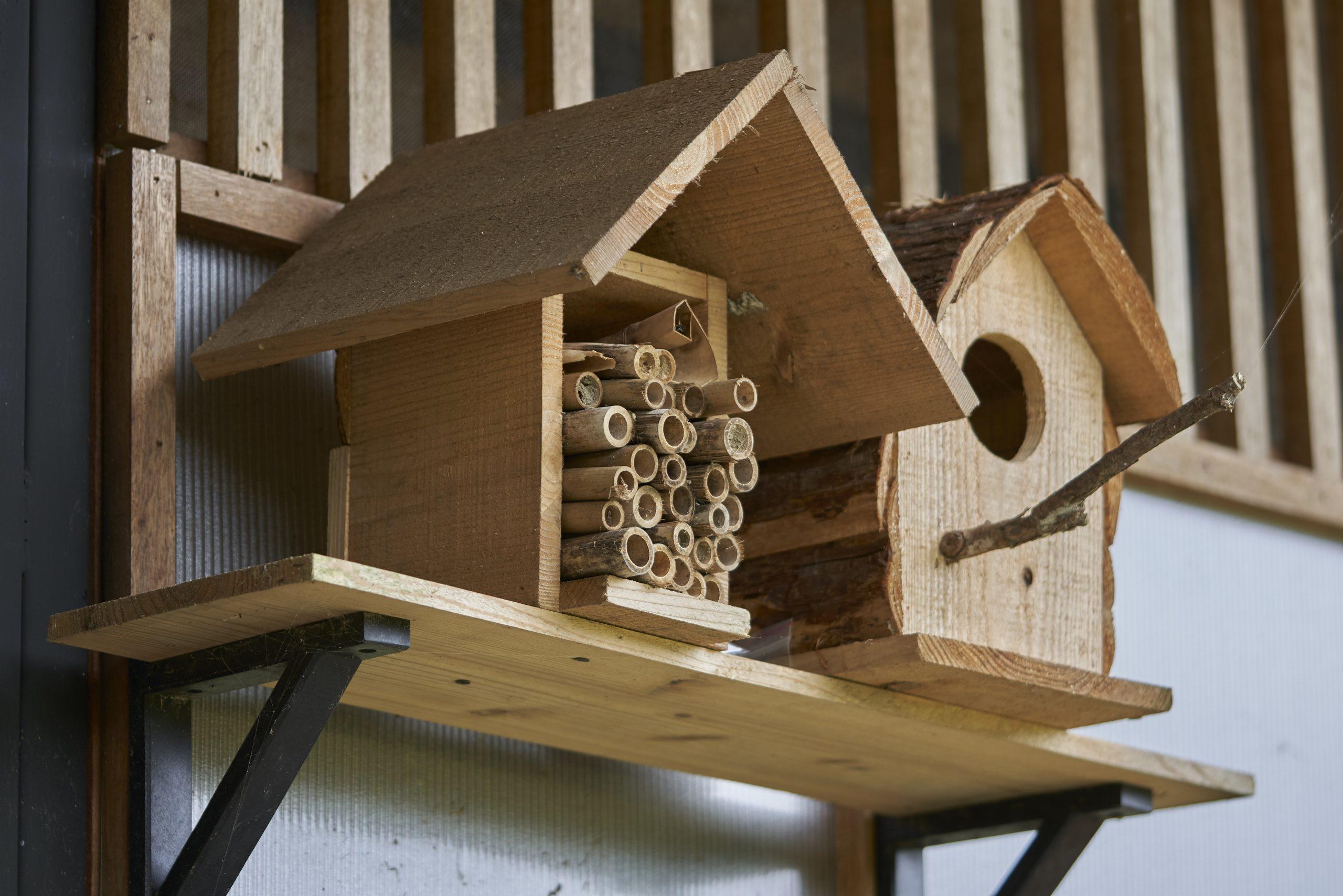 蜂與蜘蛛02