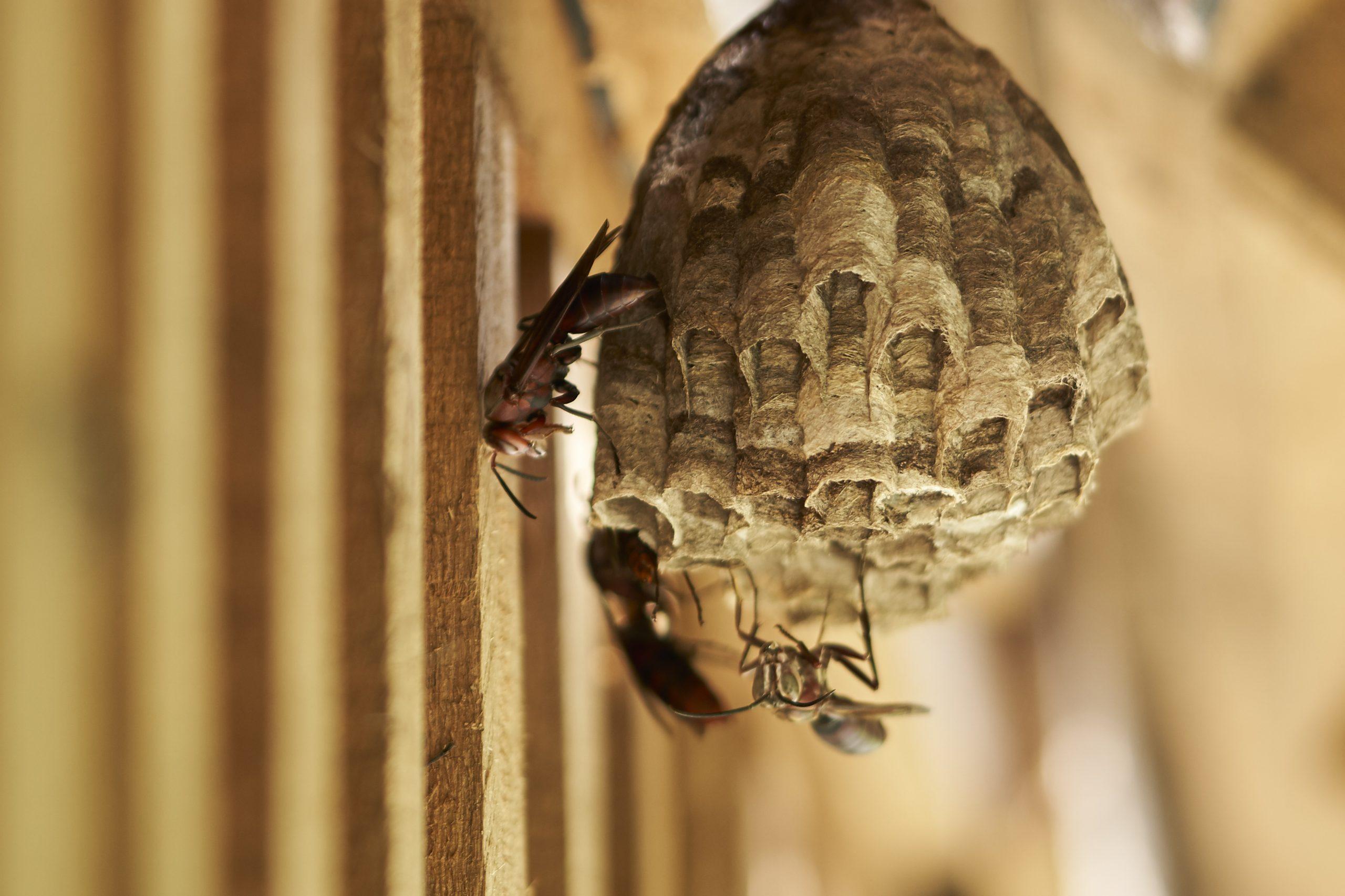 蜂與蜘蛛image